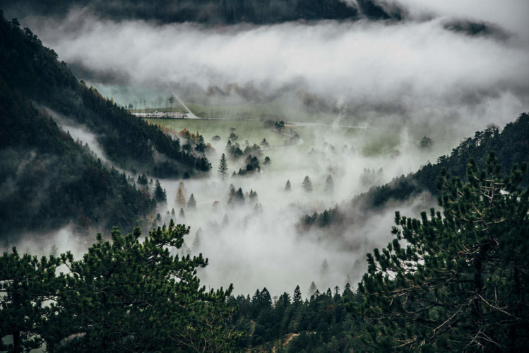 forest-749x500.jpg