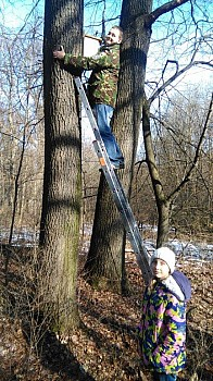 Teraz posadzą drzewa
